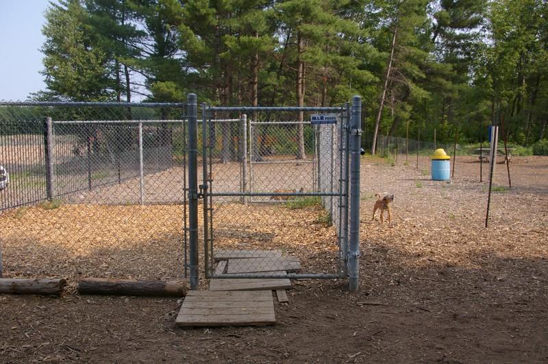 Municpal Dog Park M Amp R Feeds And Farm Supply