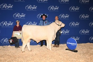 Cornerview Charolais and the Coughlin Team