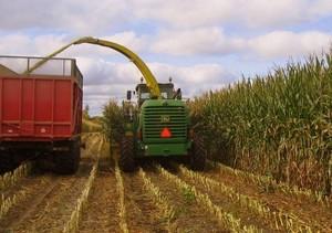 Hayway Farms Corn Silage Plot